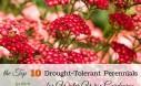 10 Drought Tolerant Perennials