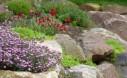 A Beautiful Rock Wall Garden