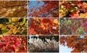 Amazing Fall Foliage Large