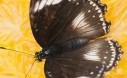 Butterfly On Orange In DIY Butterfly Feeder