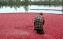 Cranberry Bog Flooded Fort Langley British Columbia Small