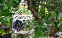 DIY Birdcage Succulent Planter