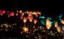 DIY Tulip Garden Lights 4