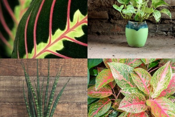 gorgeous indoor plants that love the dark - Low Light Flowering House Plants
