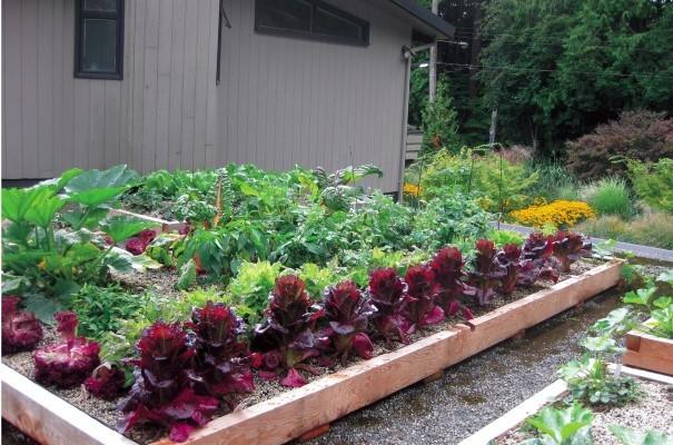Build An Edible Rooftop Garden