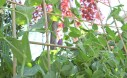 How To Make A DIY Woven Bamboo Trellis With Only One Material