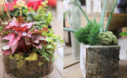 Indoor Plant Arrangements Essential Guide