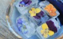 Make These Edible Flower Ice Cubes For Guests The Even Taste A Bit Sweet