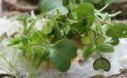 Radish Seedlings On Toast And Egg