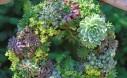 Semper Viva Wreath How To Make A Succulent Wreath