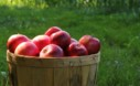 The Complete Checklist For Garden Tasks In Fall Apple Basket
