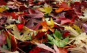 The Easy Way To Clean Up Leaves