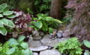 Two Tier Rhubarb Leaf Birdbath From The Book Garden Made