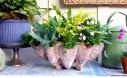 Houseplants Outdoors: Ferns