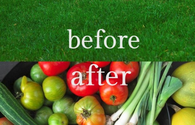converting lawn into a vegetable garden with raised garden beds