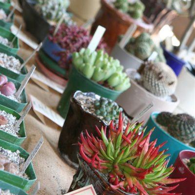 Desert Plant Show at VanDusen Garden