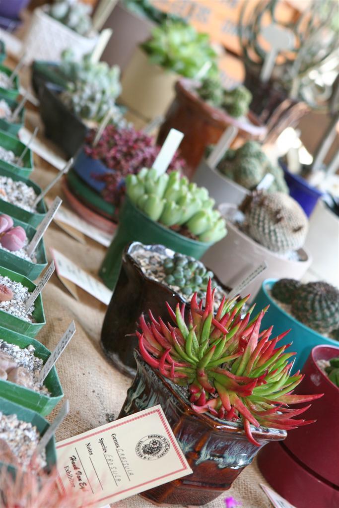 Cacti & Sedums & Semps, Oh My!