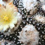 An amazing cacti
