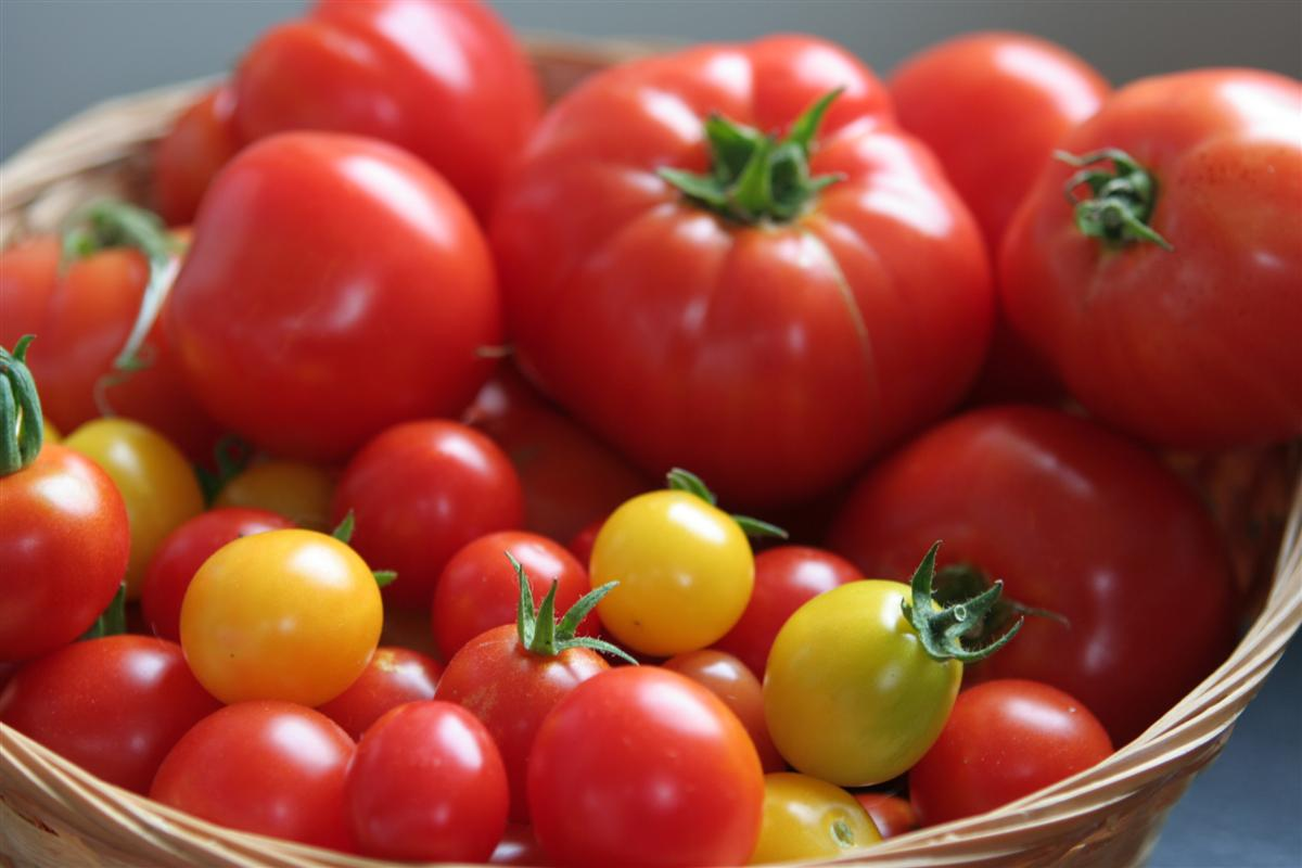 Tomato Bounty Custom