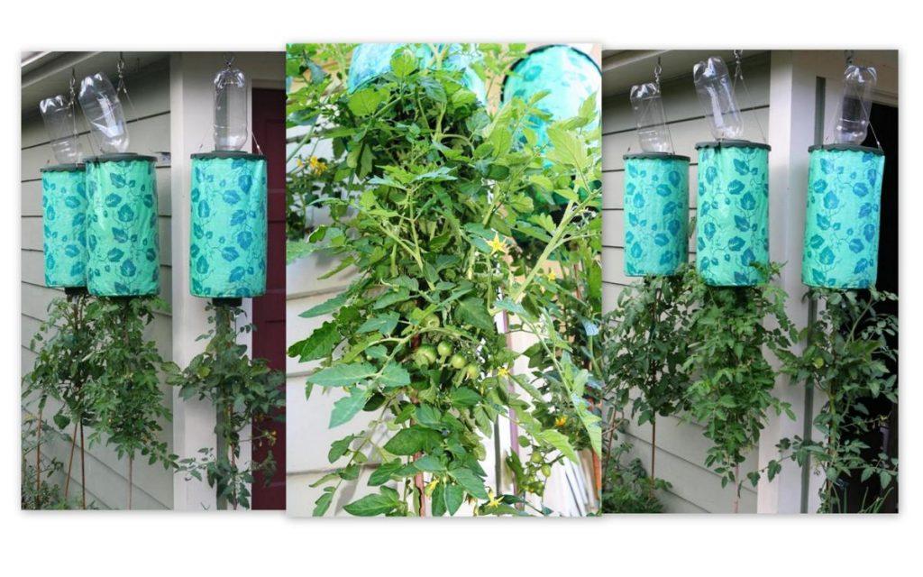 Topsy Turvy Tomato Collage (Custom)