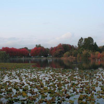 Trout Lake Dog Park
