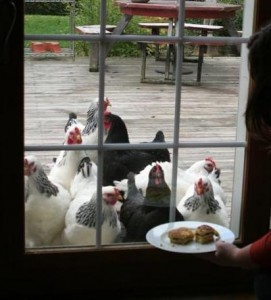 Chickens begging for pancakes.  I wonder why?