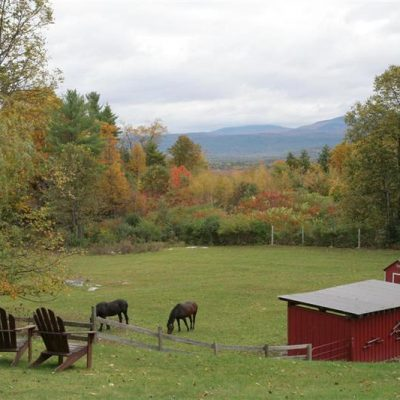 Sassy Goats, Begging Chickens and Chevre – A Vermont Farmstay