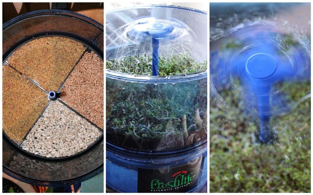From left: sprouting spelt berries, sunflower seeds, and alfalfa / radish / red clover mix; the Fresh Life Automatic Sprouter; the whirling sprinker is a hit with the under 4 crowd.