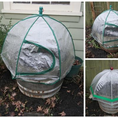 Super Sow Sunday: Umbrella Greenhouses