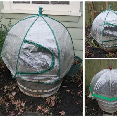 Super Sow Sunday: Umbrella Greenhouses
