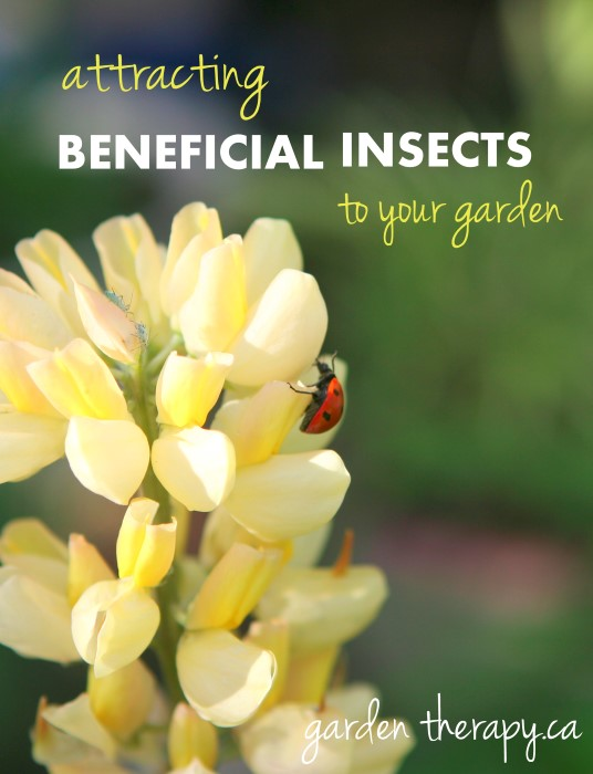Attracting Beneficial Insects to Your Garden #gardentherapy