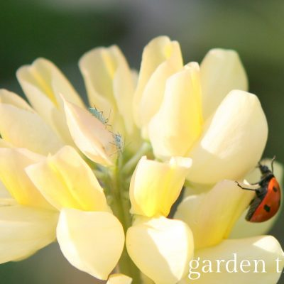 Organic Ways of Getting Rid of Pests in the Garden