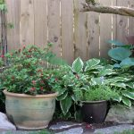 Azeala Red, Virginia Creeper and Hostas