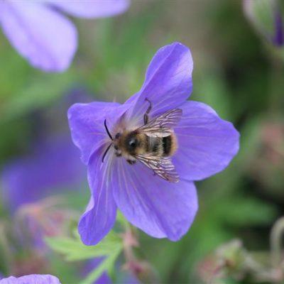 Garden Blogger's Bloom Day for Junuary