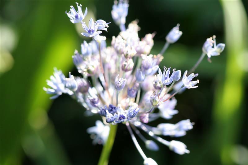 Garden Blogger's Bloom Day for July