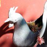 Sedum Rooster