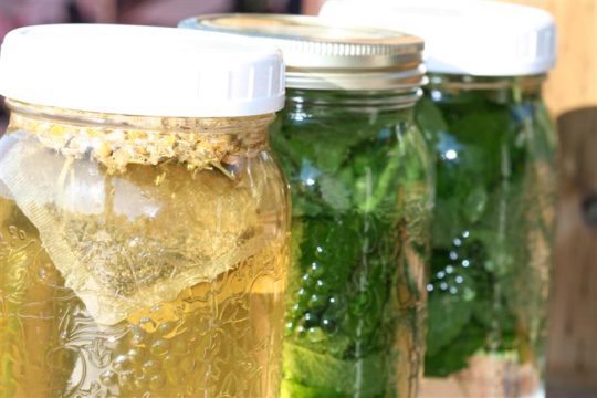 Sun Tea is a refreshing summer beverage straight from the herb garden.