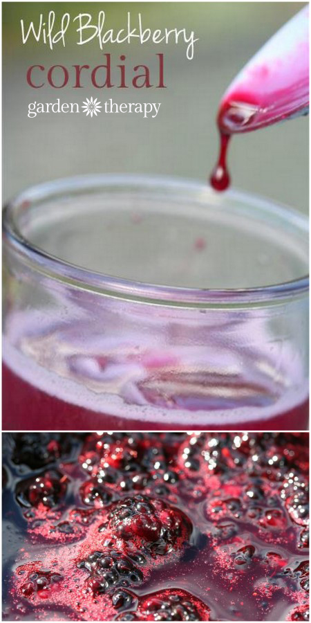 Wild Blackberry Cordial Recipe - pick wild berries then make this syrup for sodas and cocktails