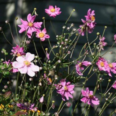 Garden Blogger's Bloom Day September 2010