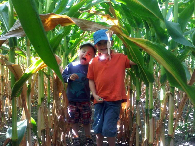 Nephews In Corn Field
