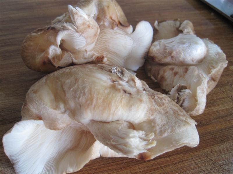 Shiitake Mushroom Harvest Nov 7 2010