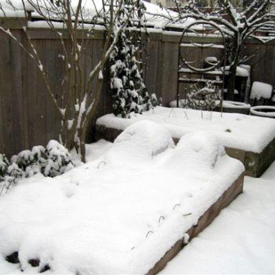 Harvesting…Snow?