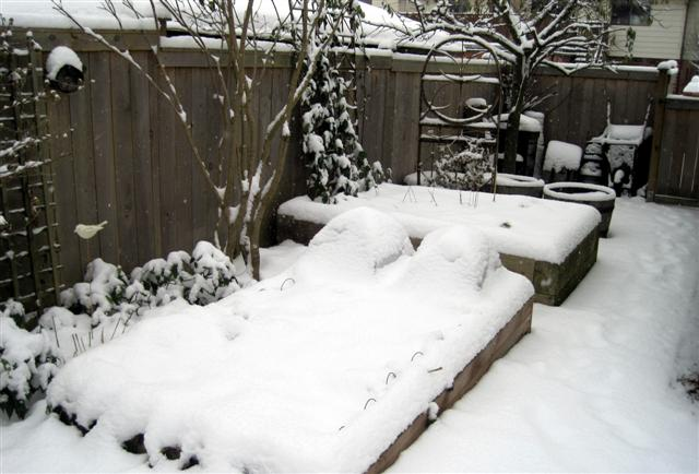 Backyard Garden Under Snow2 Small