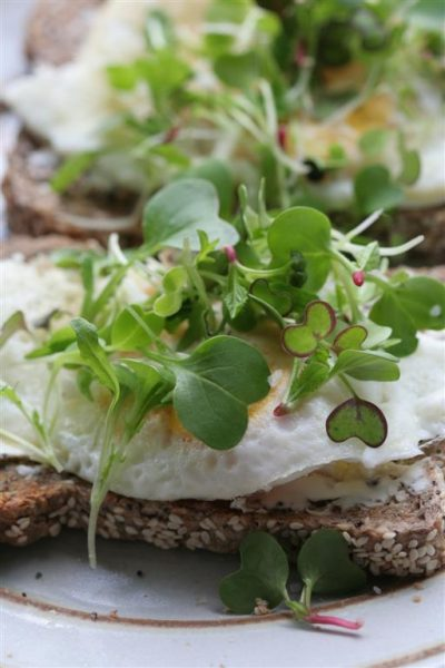 radish microgreens on a toast and egg open face sandwhich