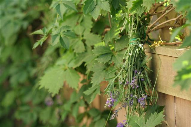 Drying Lavender = Garden Decor - Garden Therapy®