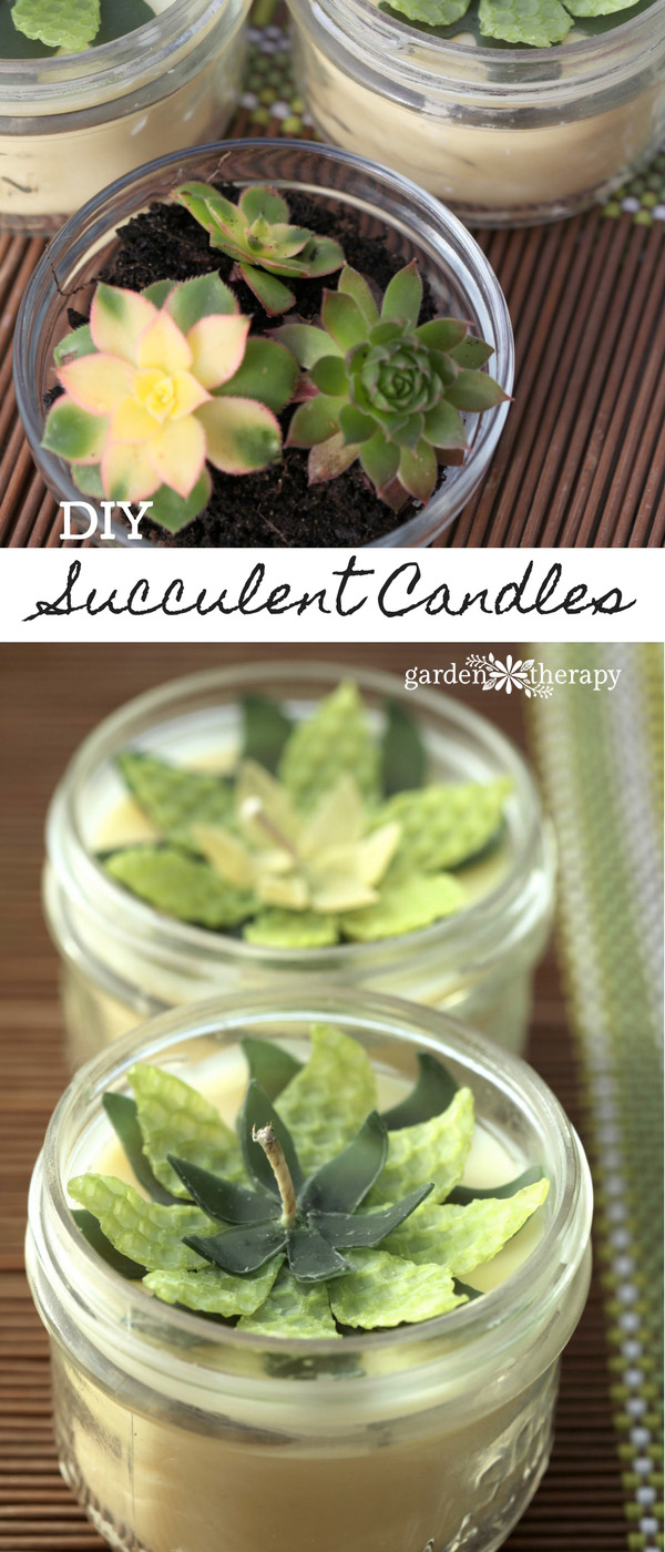 Make these easy beeswax succulent candles