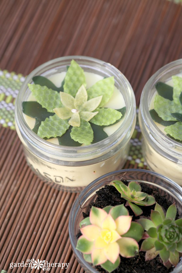 beeswax succulents in a jar