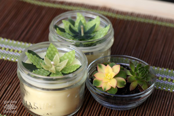 succulent candles you can DIY