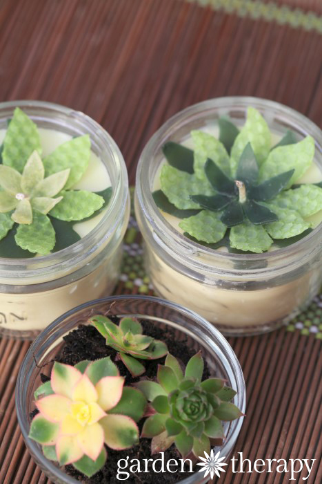 make candle toppers out of beeswax that look like succulents