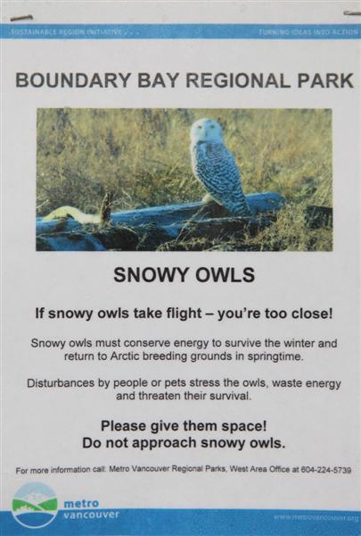 Snowy Owls info